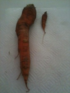 The carrot version of Me and Mini Me.