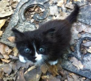Kitty 061515