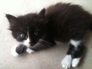 Pretty Kitty 062015