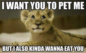i-want-you-to-pet-me