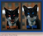 Kitty Jekyll and Hyde