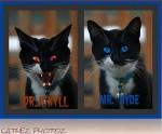 Kitty Jekyll and Hyde