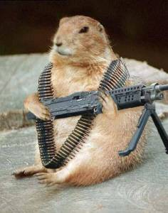Angry Gopher