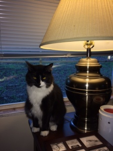 Kitty and lamp