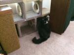 Kitty Condo 043016