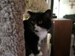 Kitty peeking out 043016