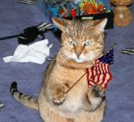 cat-with-USA-American-flag