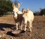 F&G Donkeys