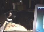 Kitty on the ottoman