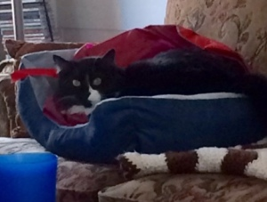 Kitty in the cat bed