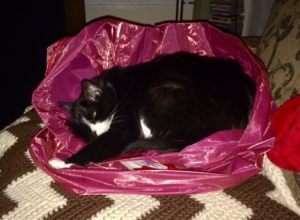 Kitty in the red bag