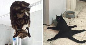 Cats acting strange