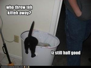 kitten in trash can