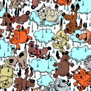 RainingCatsandDogs