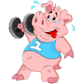 Pig lifting weights